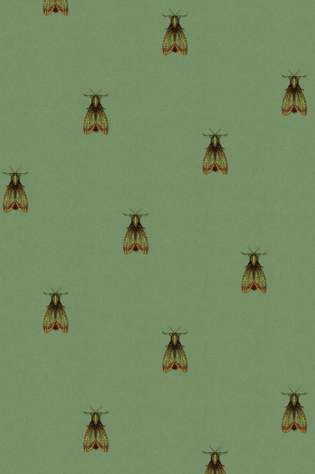 Timorous Beasties Wallpaper Papillon de nuit entomology moths