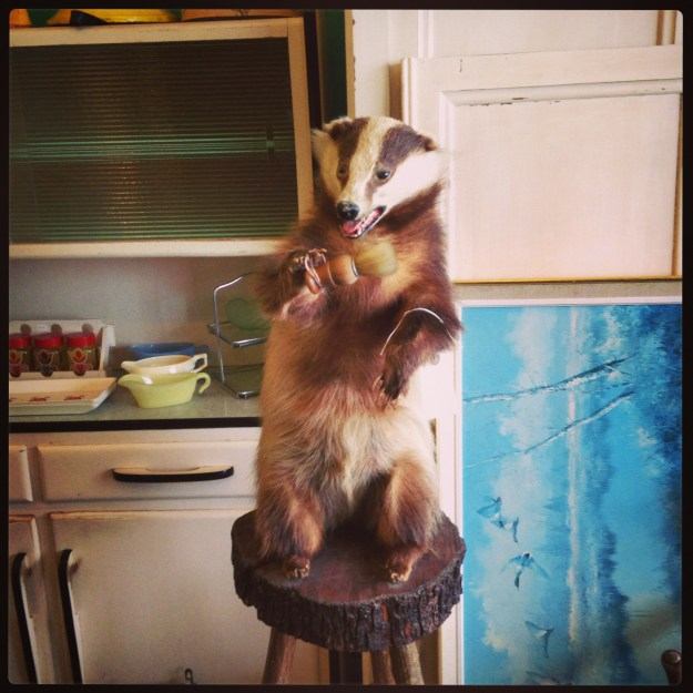 Shaving Brush Badger taxidermy