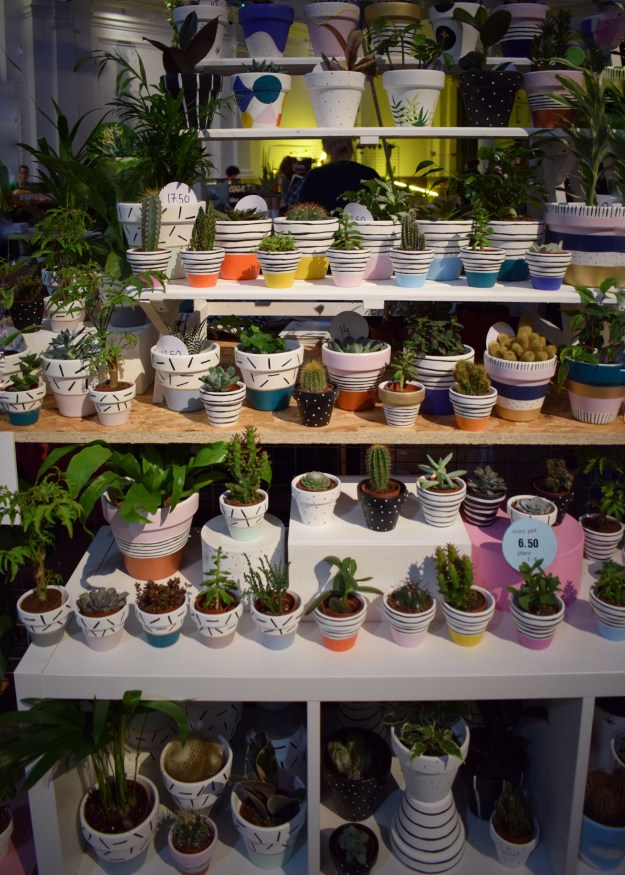 RHS Urban garden show, plant pots and cacti