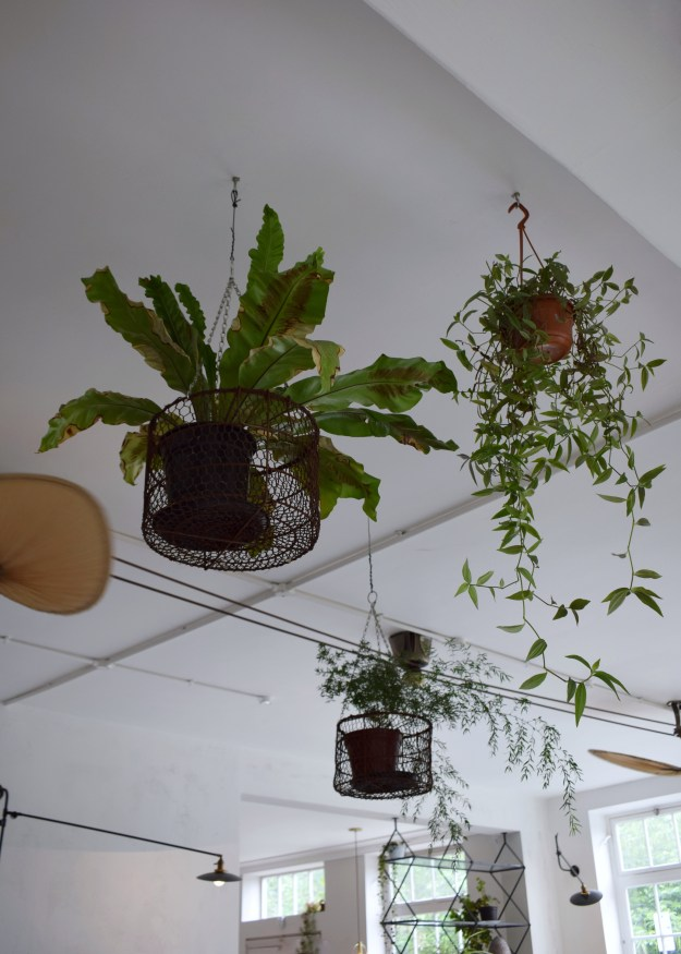 Bourne & Hollingsworth Buildings London restaurant interiors bloggers guide botanical hanging plants