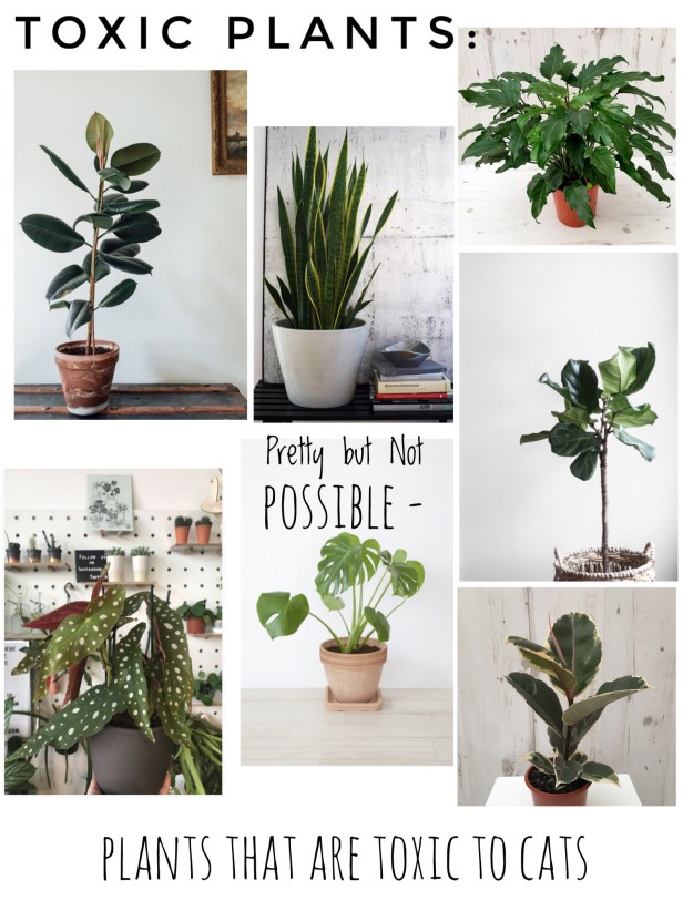 a guide to the prettiest cat safe non toxic house plants