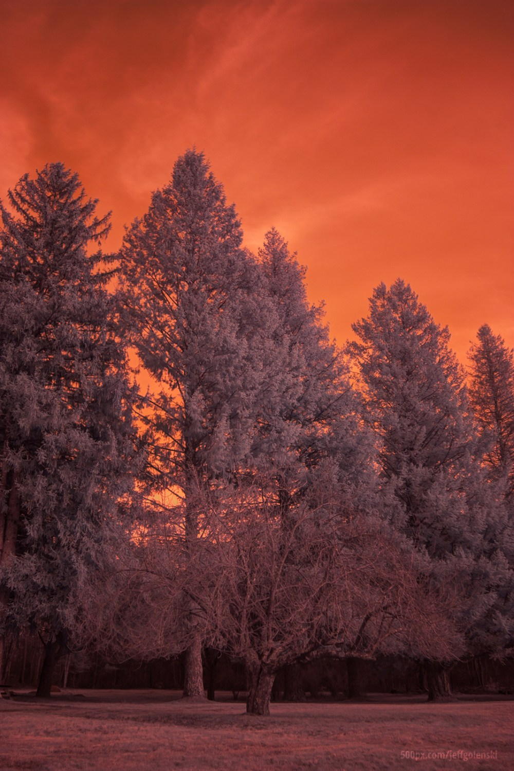 Infrared Photo. Freetown State Forest, Fall River, Massachusetts