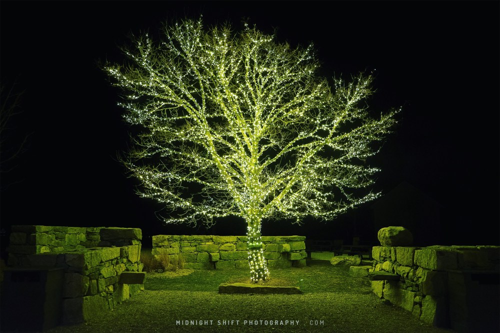A magnificently lit tree at buzzards bay brewing in Westport, Massachusetts