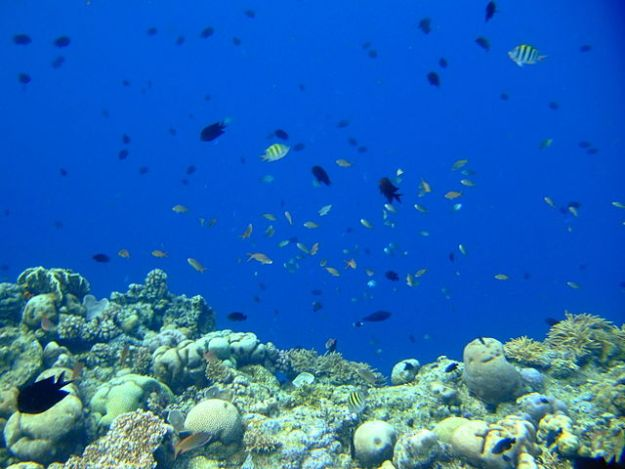 Coral wall in Bunaken