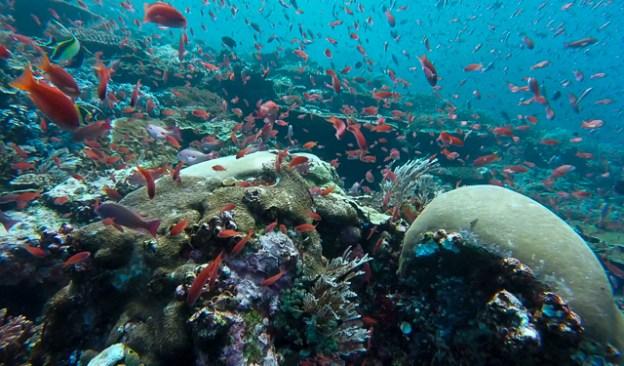 Batu Bolong diving. Komodo, Indonesia
