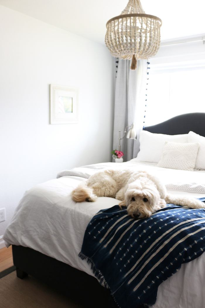 Jack the Goldendoodle - The Inspired Room Small Guest Room Design