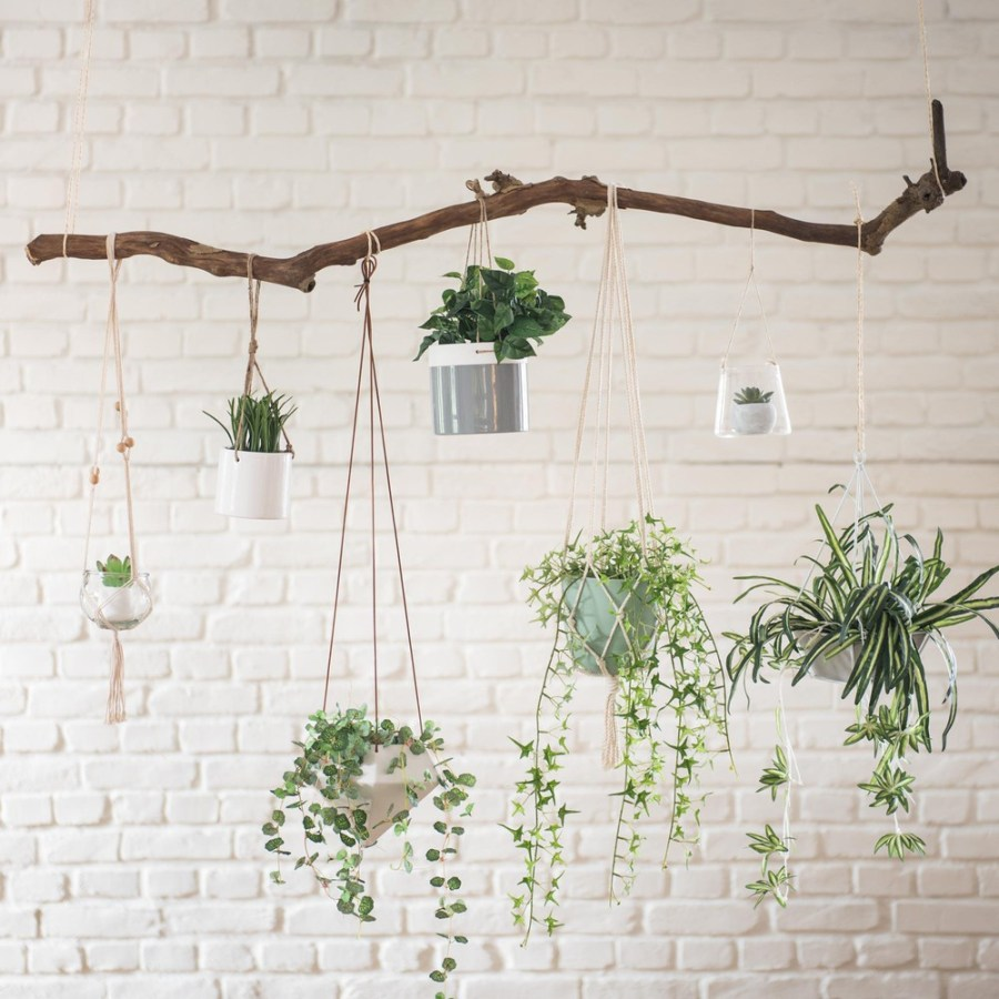idee per arredare la casa con le piante