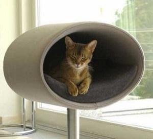 Cat Interiors