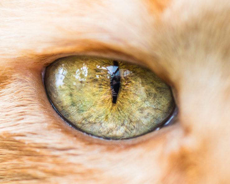Fascinating Macro Photos of Cats' Eyes by Andrew Marttila | Designwrld
