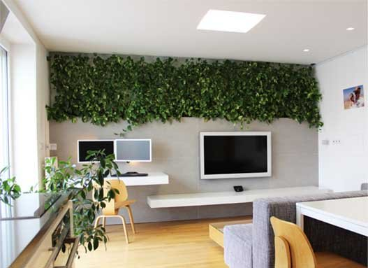 money-plant-indoor-Indian-Homes