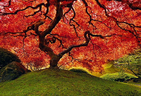 pl1a 600x410 Landscapes by Peter Lik