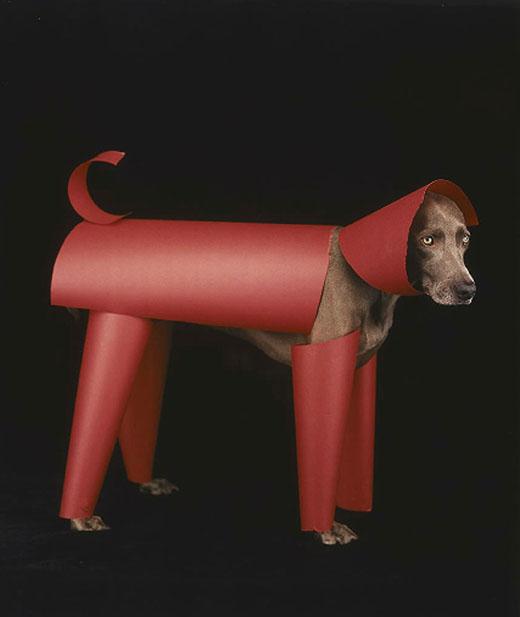 william wegman 04 Dog Portraits by William Wegman