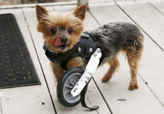 45 Injured Animals Keep Moving with Prosthetics
