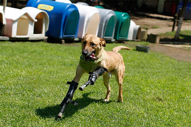 73 Injured Animals Keep Moving with Prosthetics