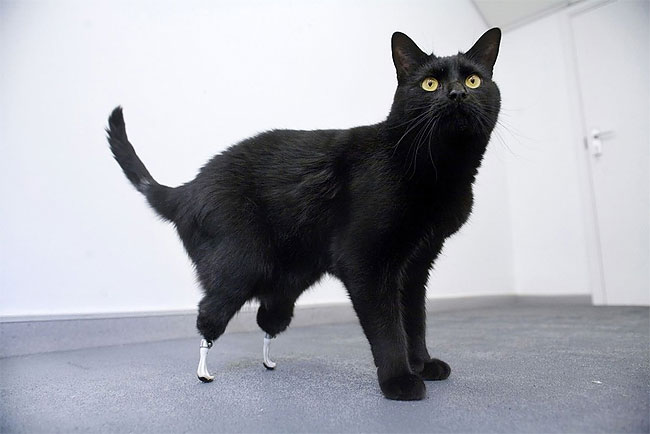 82 Injured Animals Keep Moving with Prosthetics