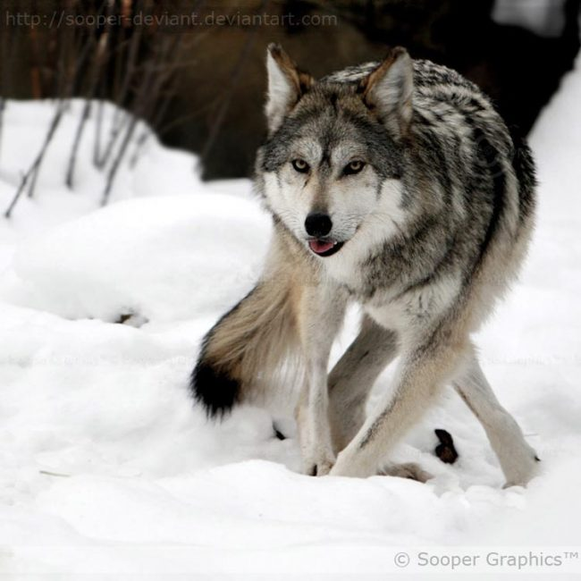 Beautiful Animal Photography by Sooper Deviant 21 650x650 12 Beautiful Animal Photography by Sooper Deviant