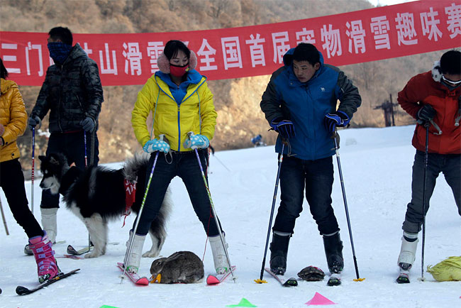 1043 Pets and their Owners Take to the Ski Slopes in China