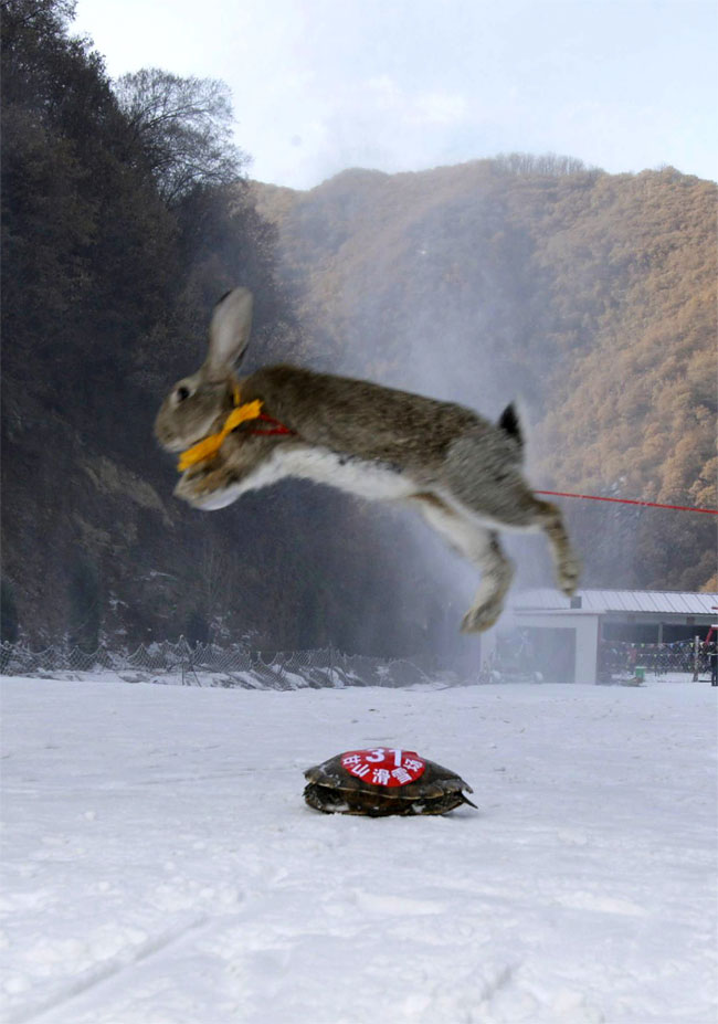592 Pets and their Owners Take to the Ski Slopes in China