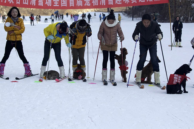 768 Pets and their Owners Take to the Ski Slopes in China