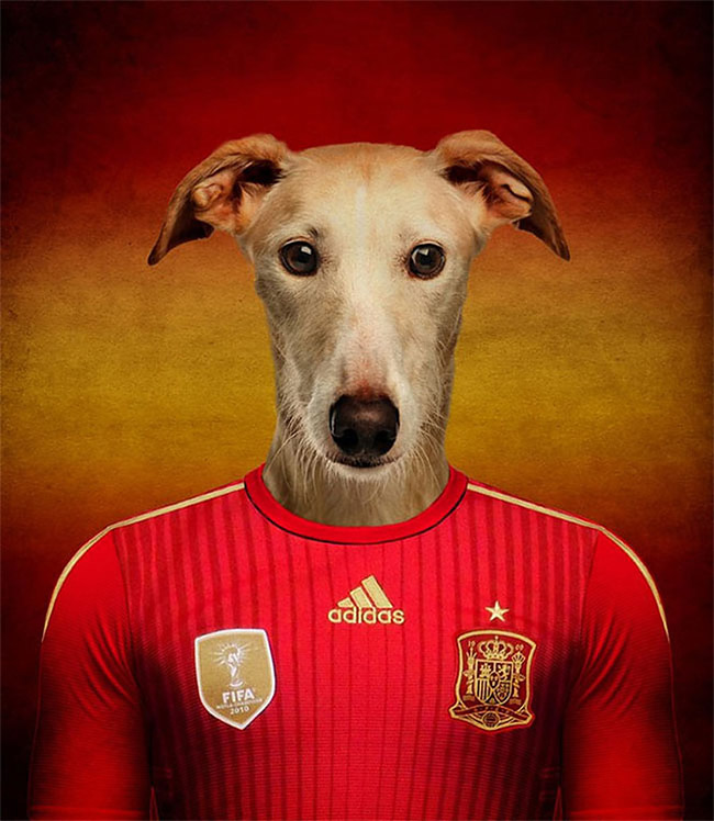 1435 Dogs Of Word Cup Brazil 2014
