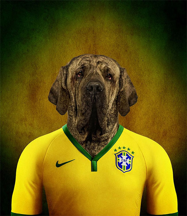 1529 Dogs Of Word Cup Brazil 2014