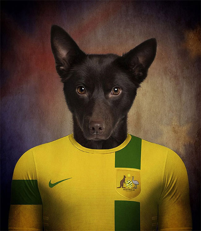 1621 Dogs Of Word Cup Brazil 2014