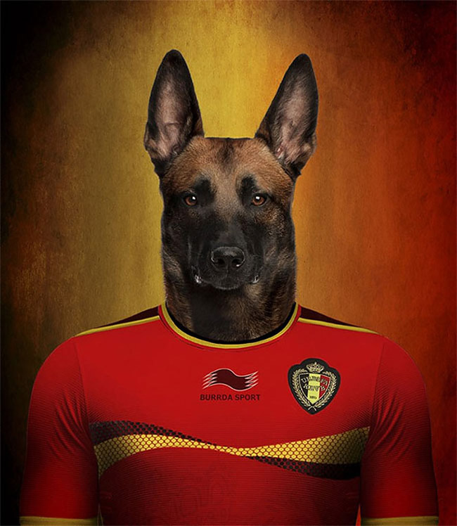 4124 Dogs Of Word Cup Brazil 2014