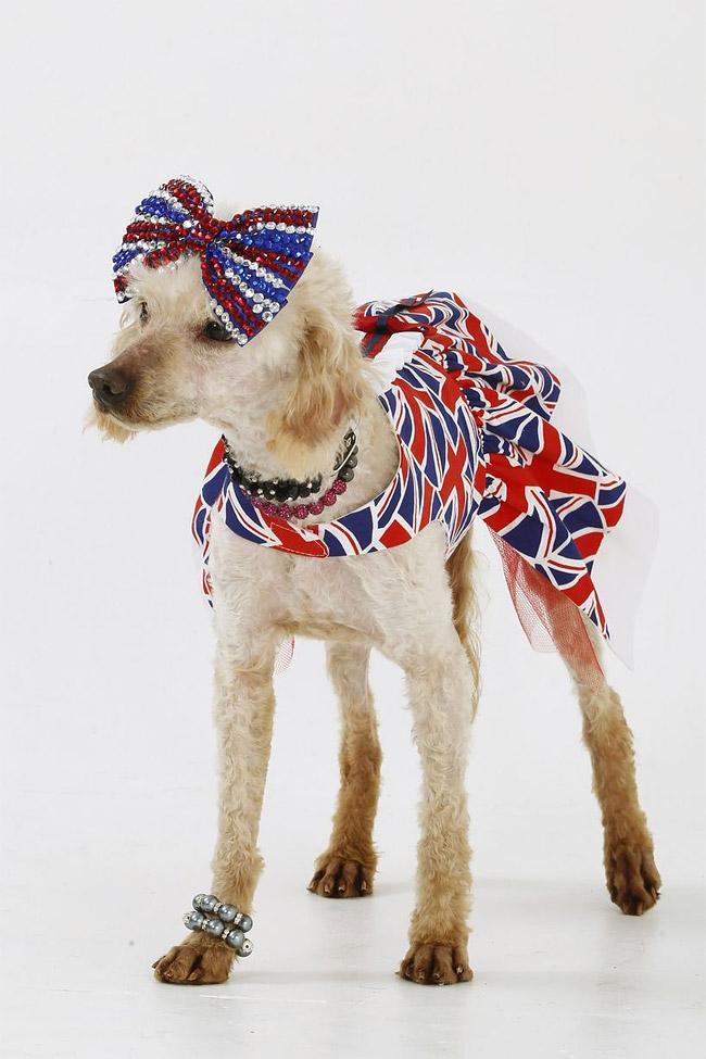 254 British Dog Lover Spends £30,000 On Her Nine Pets
