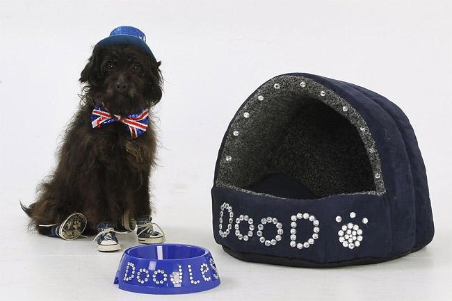 340 British Dog Lover Spends £30,000 On Her Nine Pets