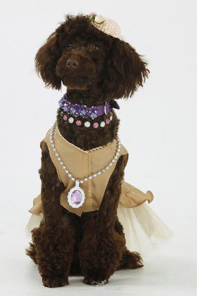 438 British Dog Lover Spends £30,000 On Her Nine Pets