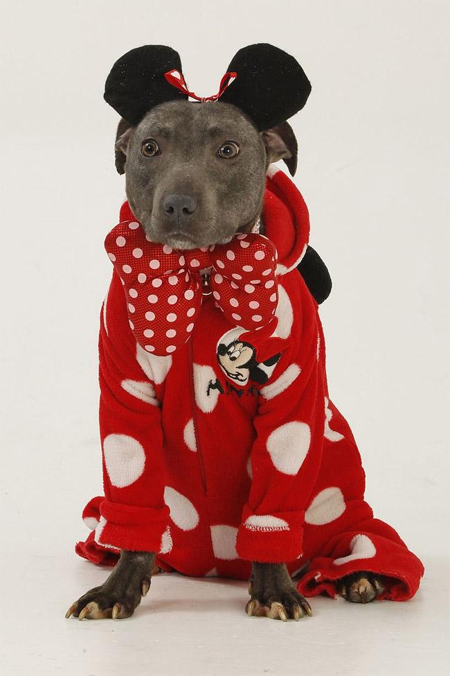 539 British Dog Lover Spends £30,000 On Her Nine Pets