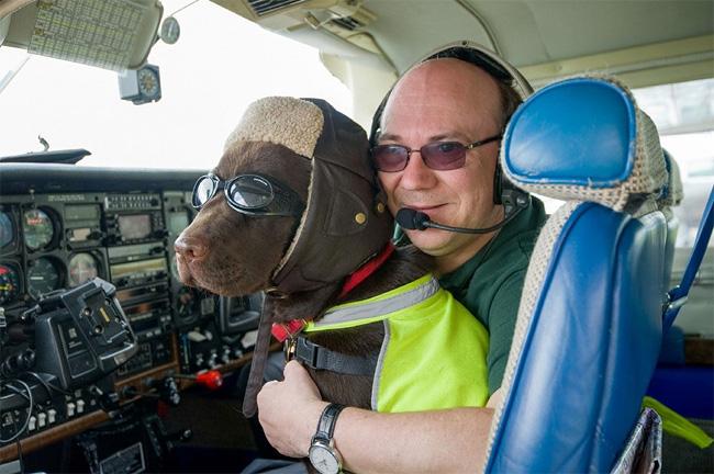 1133 British Pet Dog Gets Co Pilot License