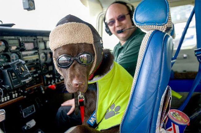 376 British Pet Dog Gets Co Pilot License