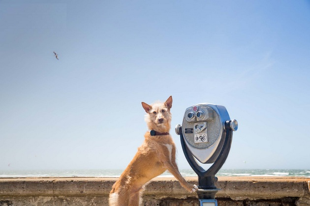 Keep Your Pup In Check With WhistleGPS Dog Monitor 4 Keep Your Pup In Check With WhistleGPS Dog Monitor