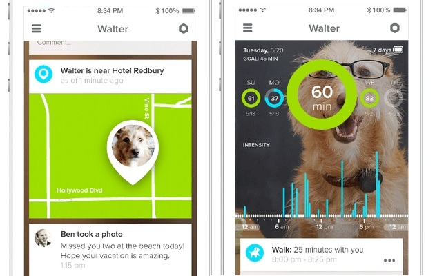 Keep Your Pup In Check With WhistleGPS Dog Monitor 7 Keep Your Pup In Check With WhistleGPS Dog Monitor