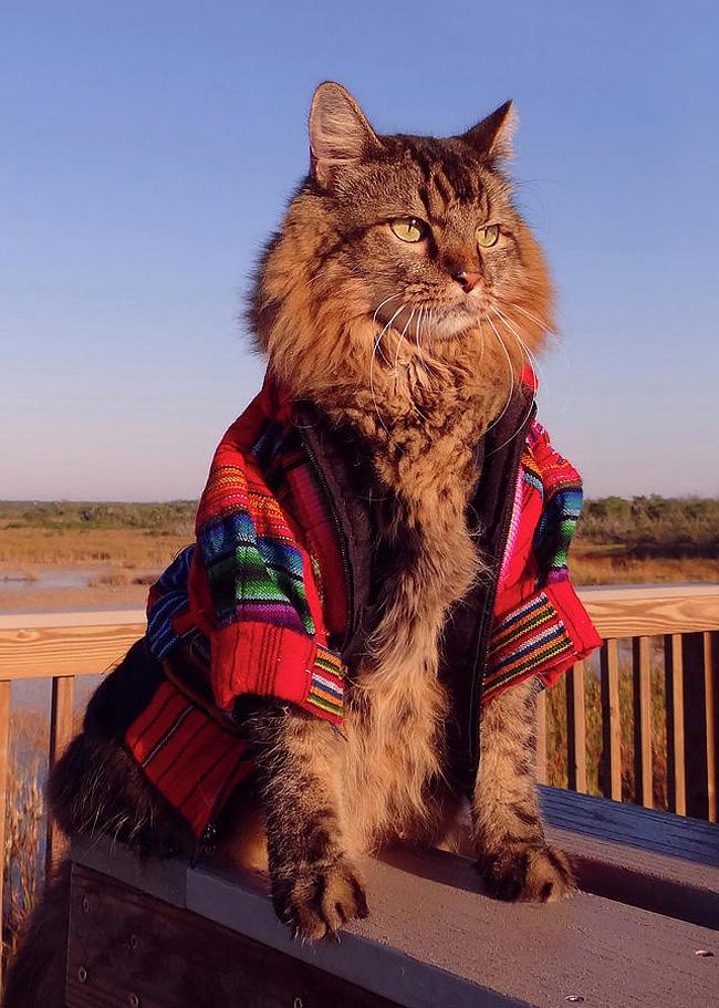 1194 Lorenzo The Cat by Joann Biondi