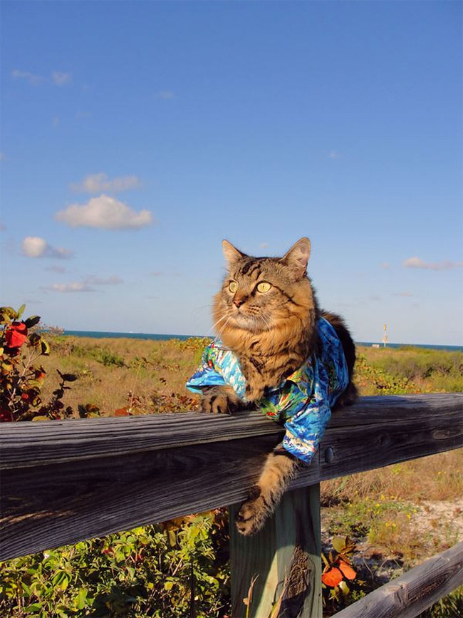 2136 Lorenzo The Cat by Joann Biondi