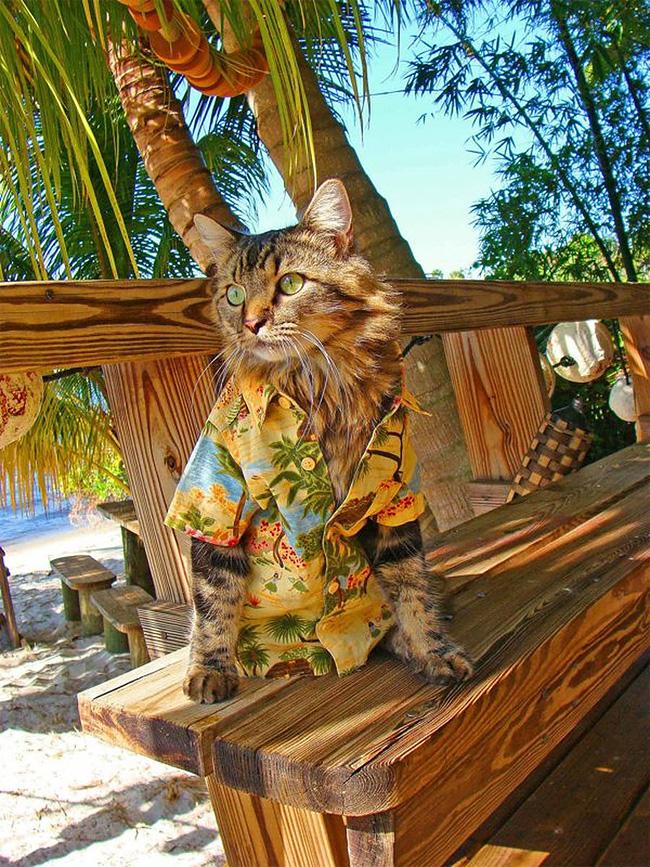 3108 Lorenzo The Cat by Joann Biondi