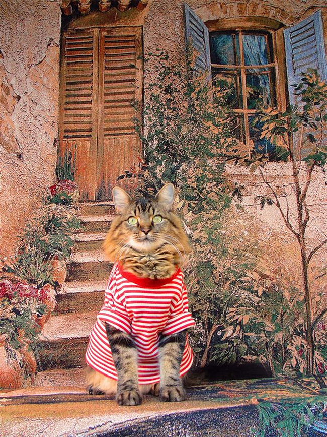 489 Lorenzo The Cat by Joann Biondi