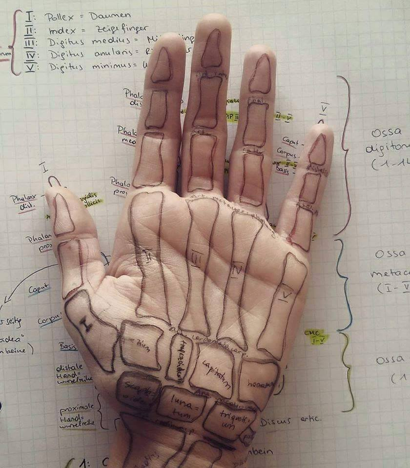 Easy Way Of Learning Anatomy