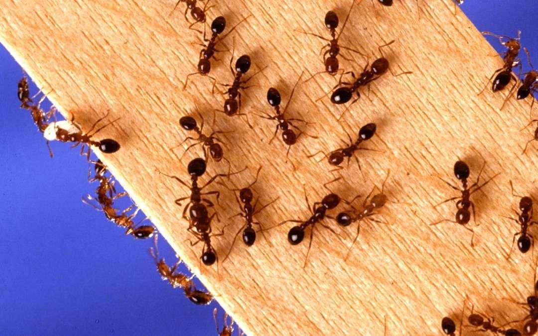Plagas Hormigas Cucarachas Ratas Ratones