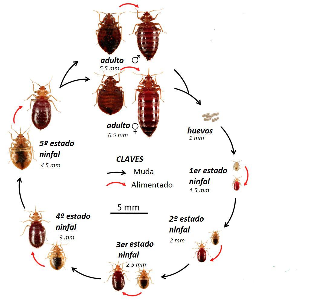 desinsectacion con insecticidas
