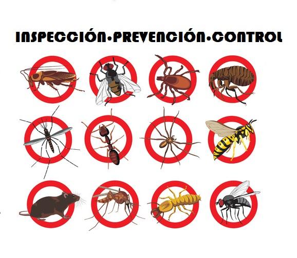 prevencion control de plagas en comunidades
