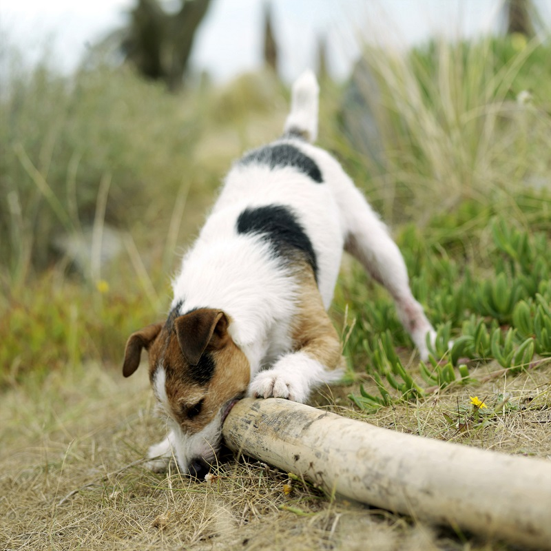 Choosing the Dog Breed for You