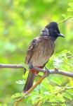 Birds Around PBEL II