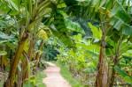 Under The Mango Tree In Hampi