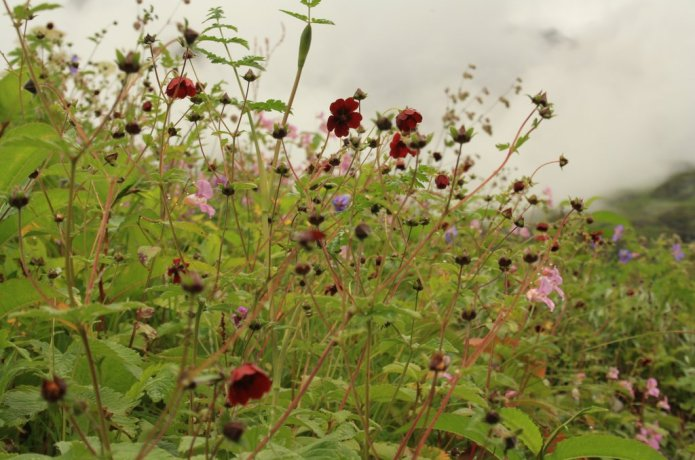 Valley of Flowers is a meadow