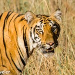 WILDLIFE PHOTOGRAPHY TIPS FOR EVERYBODY
