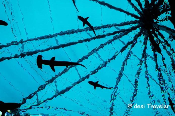 Sharks at Marine Life Park Sentosa Singapore