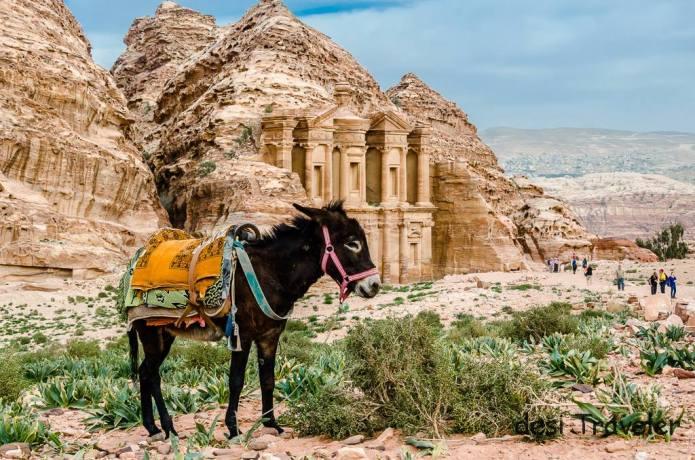 Donkey Bedouin Petra Jordan (12)